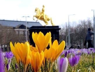 Mit dem Segway in den Dresdner Frühling